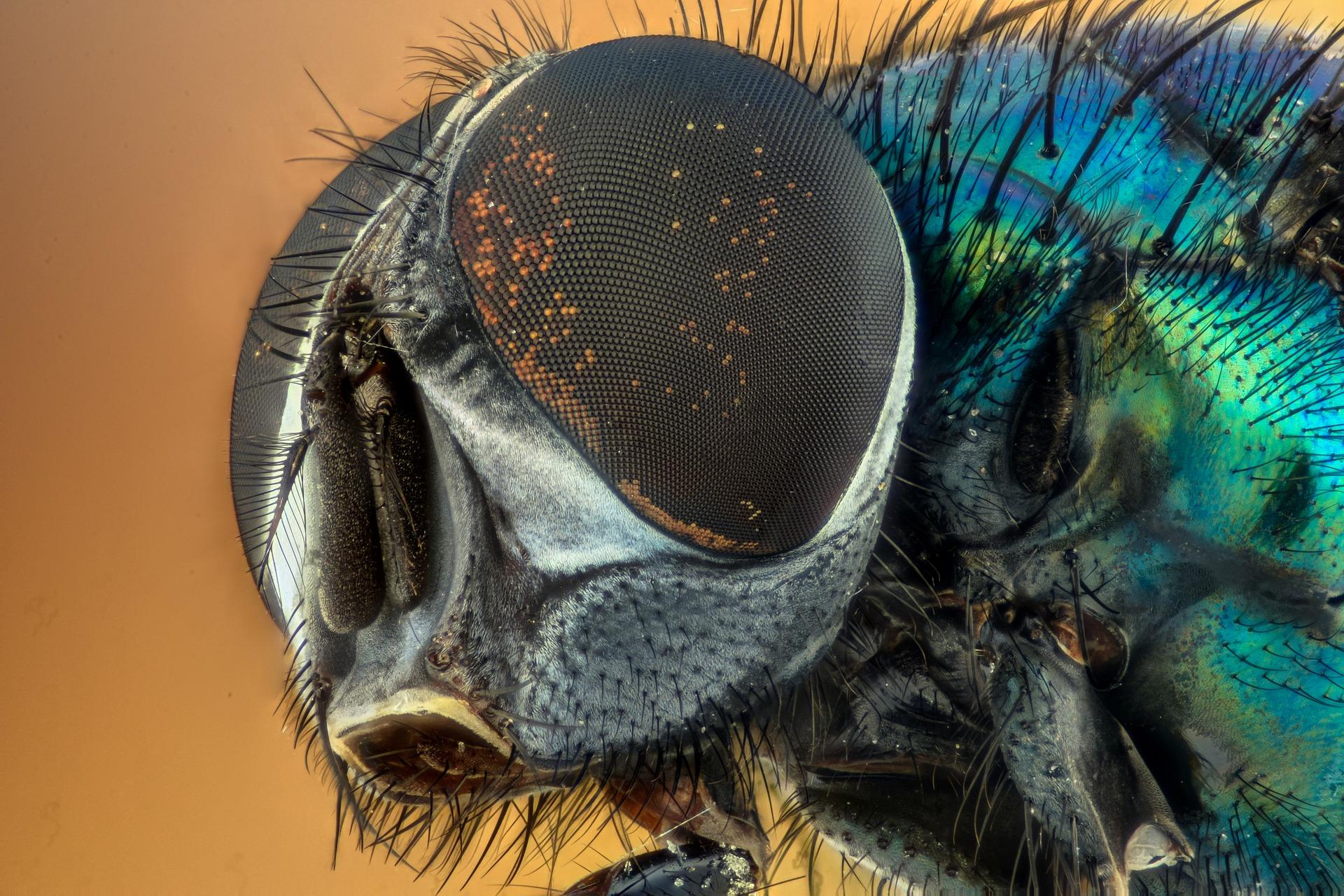 Commissione UE approva insetti come 'nuovo cibo'